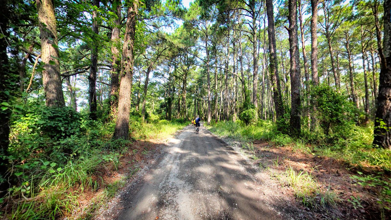 styles divers 100% authentique meilleur choix False Cape State Park - Terrain360